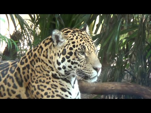 Chester Zoo Webcams Chester Zoo Webcam - Heart-of-africa-biodome-at-chester-zoo